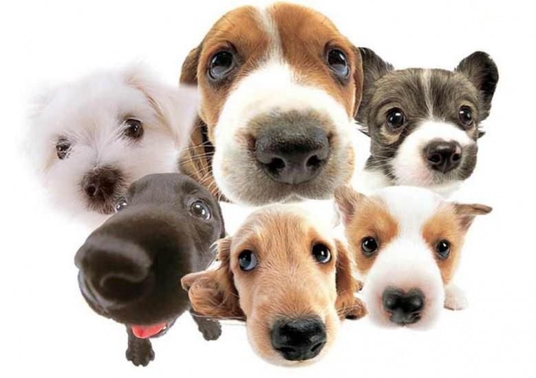 Veterinary Pharmacist Support