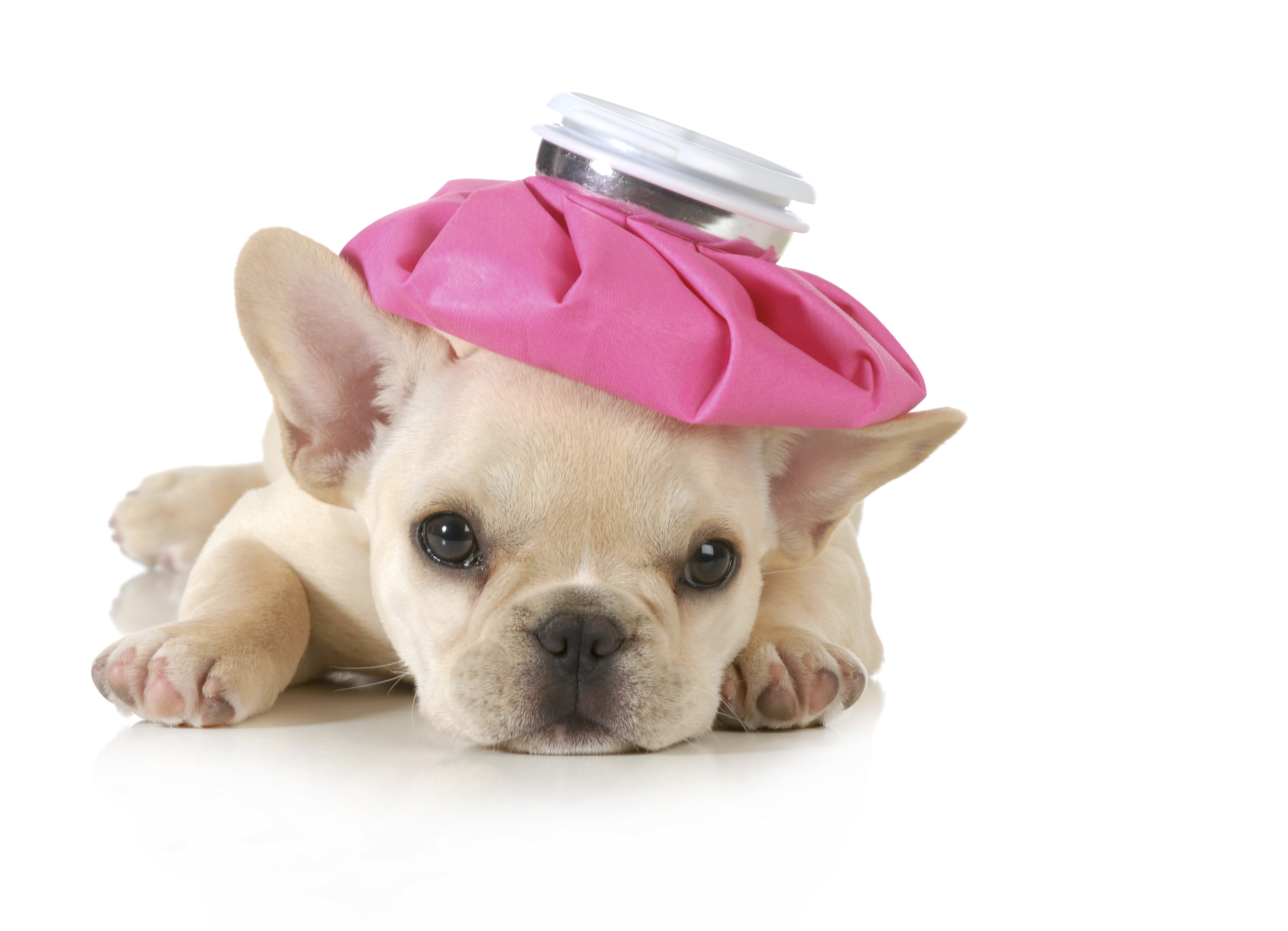 Veterinary Pharmacist